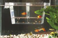 Beeztees Guppytank - Aquarium - 800ml
