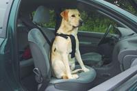 Beeztees Wandel- En Autogordel Hond XL Onderweg met de hond
