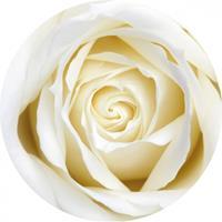 Shoppartners Bierviltjes witte roos 10 st