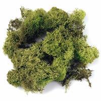 Rayher hobby materialen Decoratie mos 200 gram lichtgroen