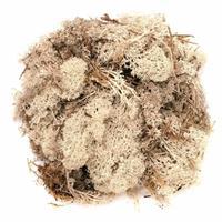Decoratie mos naturel 50 gram Beige