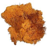 Decoratie mos oranje 50 gram Oranje