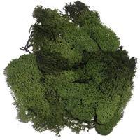 Decoratie mos donkergroen 50 gram Groen