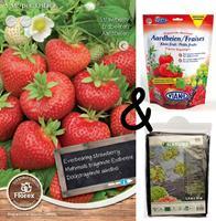 Bloembollenkopen Teeltpakket Aardbeien Ostara (1 stuks)