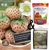 Bloembollenkopen Teeltpakket Aardbei White Pineberry (1 stuks)