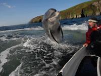 Dolfijnen boottrip vanuit Dingle