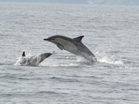 Walvissen & dolfijnen spotten vanuit Baltimore