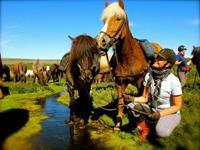 Paardrijden vanuit Myvatn of Husavik