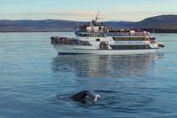 Walvis & dolfijnen boottocht