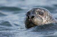 Seal Watching boottocht vanuit Hvammstangi