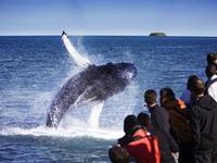 Whale Watching vanuit Husavik