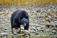 Coastal Bear Watch vanuit Tofino