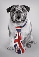 Dog Fotobehang ()