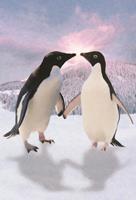 Animal Pictures Pinguins Fotobehang ()