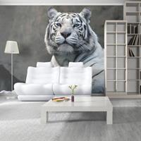 Fotobehang - Bengaalse tijger , grijs wit