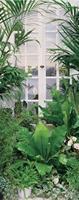 Papermoon Flower Window Vlies Fotobehang 90x200cm