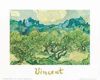 PGM Vincent Van Gogh - Landscapes with olive trees Kunstdruk 30x24cm
