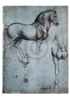 PGM Leonardo Da Vinci - Studio di cavalli Kunstdruk 35x50cm