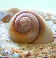 PGM Donna Geissler - Beach Shell IV Kunstdruk 30x30cm