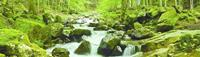 Papermoon Waterstream Panorama Vlies Fotobehang 350x100cm