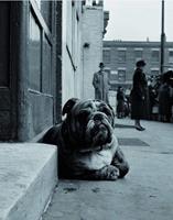 PGM Gay - Lazy Bulldog at Camden Town Kunstdruk 40x50cm