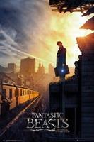 GBeye Fantastic Beasts One Sheet 2 Poster 61x91,5cm