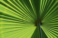 PGM Ortwin Klipp - Leaf 1 Kunstdruk 70x50cm