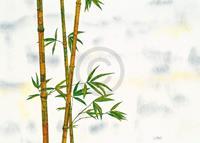 PGM Michael Ferner - Bambus Kunstdruk 70x50cm