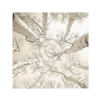 PGM Adam Brock - Silver Birch Kunstdruk 51x51cm