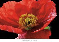 PGM Amalia Elena Veralli - Red Poppy Kunstdruk 91x66cm