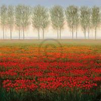 PGM Park - Morning Mist Kunstdruk 68x68cm