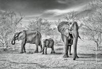 Wizard+Genius Elephant Family Vlies Fotobehang 384x260cm 8-banen