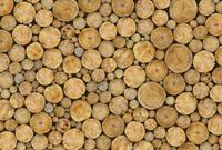 Wizard+Genius Logs Vlies Fotobehang 384x260cm 8-banen