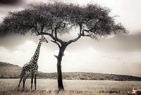 Wizard+Genius Giraffe Safari Vlies Fotobehang 384x260cm 8-banen