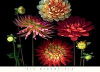 PGM Pip Bloomfield - Dahlia Garden Kunstdruk 91x66cm