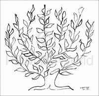 PGM Henri Matisse - Le platane Kunstdruk 100x100cm