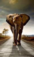 Dimex Walking Elephant Vlies Fotobehang 150x250cm 2-banen