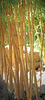 Papermoon Bamboo Vlies Fotobehang 90x200cm