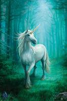 Pyramid Anne Stokes Forest Unicorn Poster 61x91,5cm