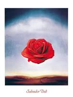PGM Salvador Dali - Rose meditative Kunstdruk 60x80cm