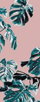 Komar Monstera Rosé Blauw Vlies Fotobehang 100x250cm 1-baan