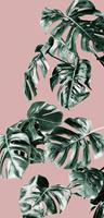 Komar Monstera Rosé Groen Vlies Fotobehang 100x250cm 1-baan