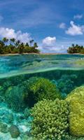 Dimex Coral Reef Vlies Fotobehang 150x250cm 2-banen