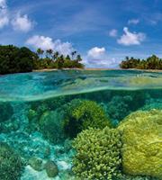 Dimex Coral Reef Vlies Fotobehang 225x250cm 3-banen
