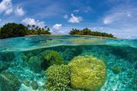 Dimex Coral Reef Vlies Fotobehang 375x250cm 5-banen