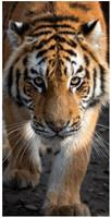 Carbotex strandlaken tijger 140 x 70 cm katoen oranje/grijs